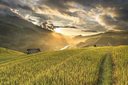 Vietnam, Rice, Rice Field, Kathy, Terraces, Hoang Suphi