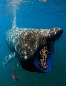 Whale, Diver, Woman, Ocean, Fish, Sea, Underwater