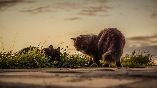 Cats, Stray, Sunset, Nature, Outdoors, Mammal, Grass