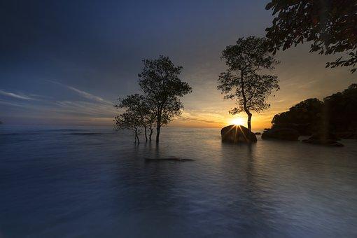 The Sun, Phuquoc, Island, Vietnam, The Beach, Mangrove