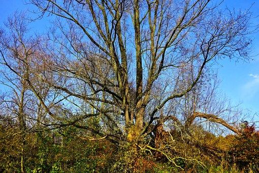 Tree, Branch, Bare Tree, Autumn Tree, Deciduous