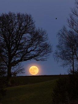 Full Moon, Tree, Nature, Dusk, Landscape, Section