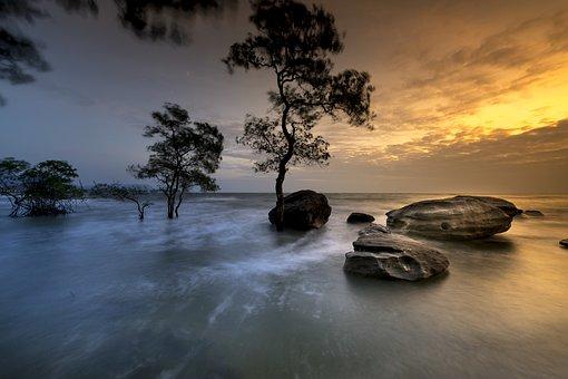 Phu Quoc, Island, Vietnam, Trees, Mangrove, Sunset