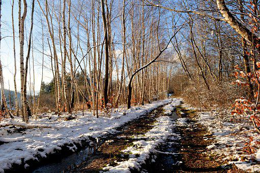 Winter, Way, Tree, Nature, Snow, The Prospect Of