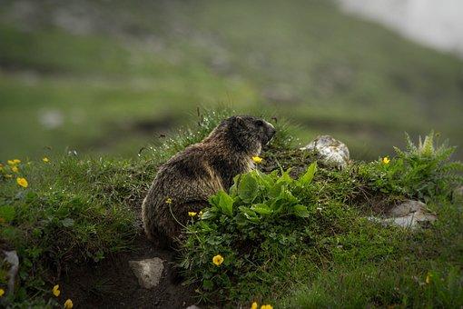 Nature, Grass, Animal World, Animal, Mammal, Wild