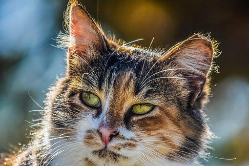 Animal, Cute, Cat, Stray, Nature, Mammal, Outdoor, Face