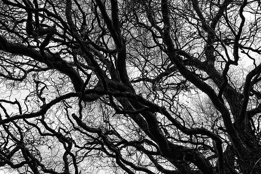 Tree, Branch, Bare Branch, Gnarled, Twisted