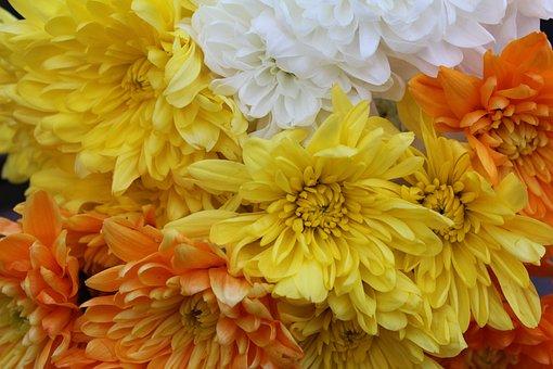 Flower, Nature, Flora, Floral, Color, Chrysanthemum