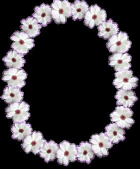 Frame, Border, Oval, White Flower