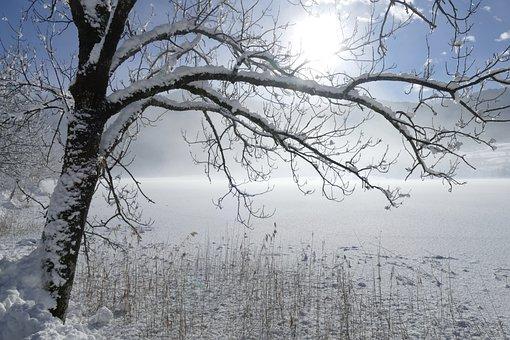 Winter, Tree, Snow, Cold, Frost, Landscape, Frozen
