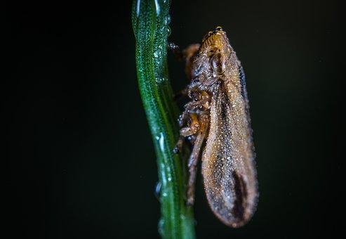 Insect, Bespozvonochnoe, No One, Nature, Living Nature