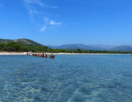 Horses, Bathing, Sea, Blue, Transparent, Animals