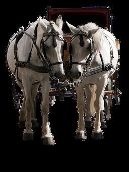 Transport, Traffic, Coach, Horse, Team, Viaker