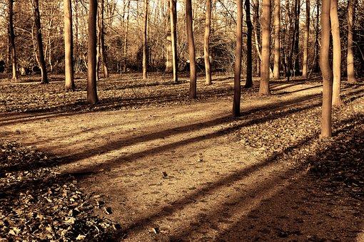 Forest, Trees, Sunlight, Shadows, Long Shadows