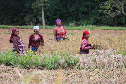 Child, People, Adult, Farming, Lifestyle, Nepal