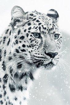 Leopard, Cheetah, Animal World, Animal, Mammal, Cat