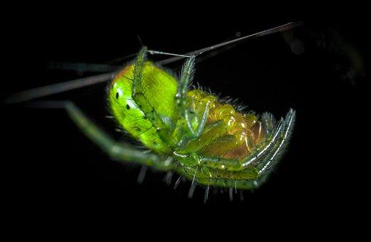Bespozvonochnoe, Nature, Animals, Living Nature, Spider