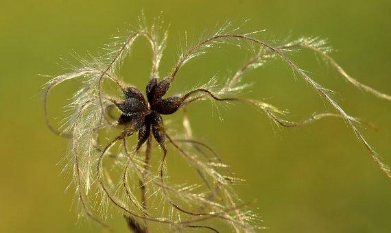 Nature, Same, Close, Macro, Filigree, Flying Seeds