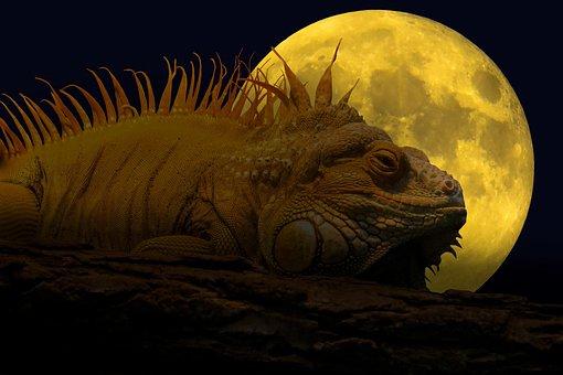 Animal, Lizard, Iguana, Reptile, Crawl, Scale, Moon