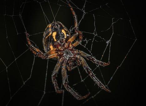 Spider, Spider Web, Trap, Fear, Arachnids, Macro