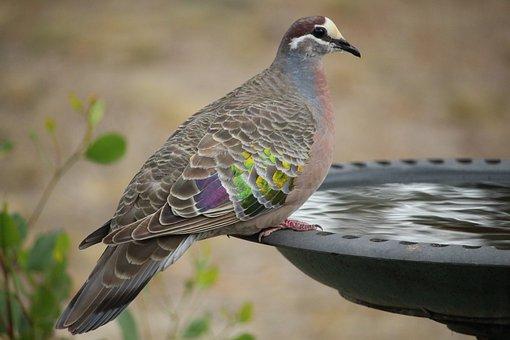 Bird, Nature, Wildlife, Animal, Wing, Wild, Feather