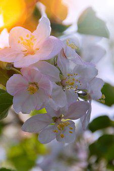 Flower, Plant, Nature, Garden, Leaf Plants, Branch