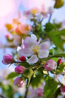 Flower, Nature, Plant, Garden, Branch, Wood