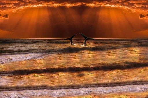 Sea, Wave, Whale, Horizon, Sun, Cloud, Sky, Orange Sky