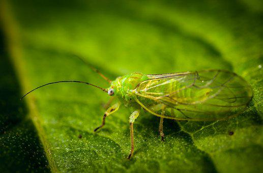 Insect, Nature, Pest, Krupnyj Plan, Outdoors, Aphid