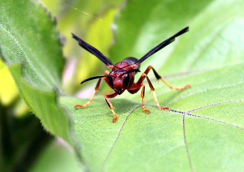 Insect, Nature, Animal, Invertebrate, Outdoors