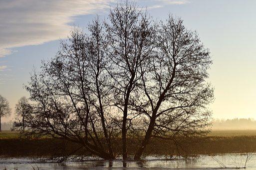 Kahl, Winter, Twilight, Fog, Haze, Deciduous Tree