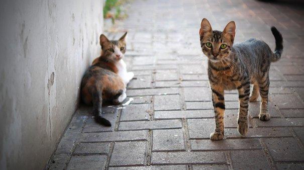 Cat, Cute, Animal, Kitten, Pet