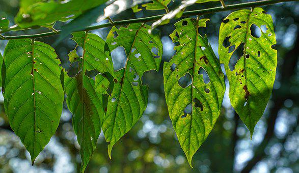 Leaf, Insect, Eating, Texture, Nature, Flora, Growth