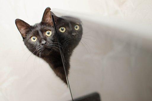 Cat, Black Cat, Domestic Cat, Looking Cat, Golden Eyes