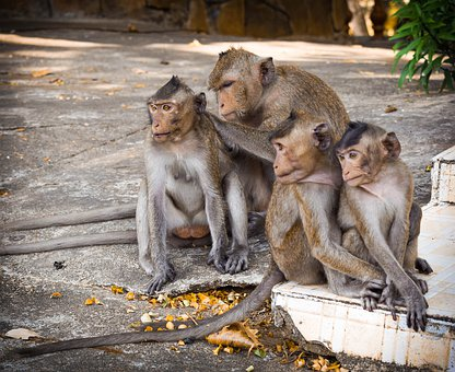Mammal, Wild World, Animal, Monkey, Nature, Sitting