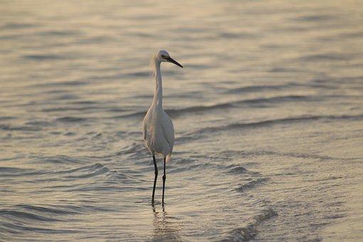 Bird, Water, Nature, Wildlife, Lake, Marsh, Shorebird