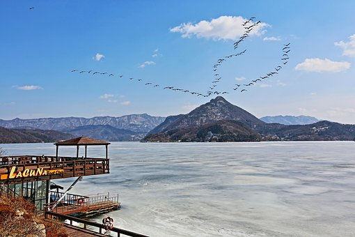 North Han River, Winter, Migratory Birds, Scenery