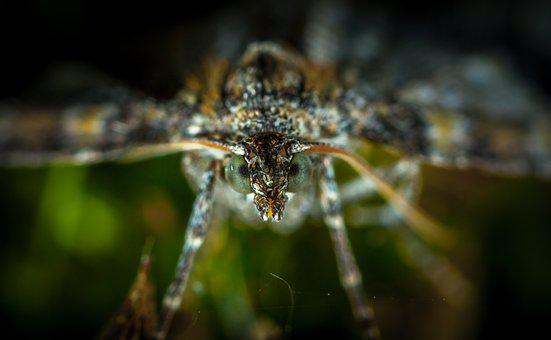 Insect, Nature, Outdoors, Living Nature, Animals, Macro