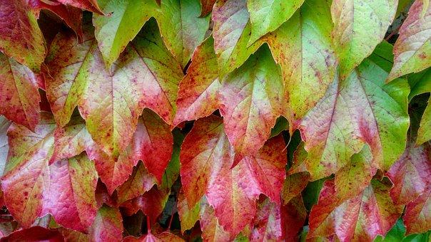 Leaf, Autumn, Nature, Plant, Season, Garden, Park