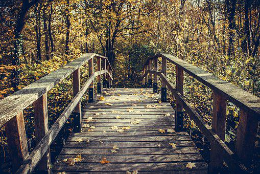 Wood, Nature, Tree, Bridge, Instructions, Woods, Park