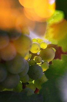 Nature, Leaf Plants, Vine, Nobody, Plant, Fruit, Summer