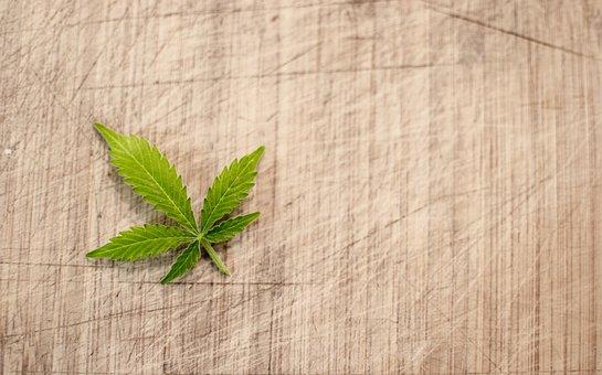 Marijuana, Cannabis, Hash, Leaf, Flora, Pot
