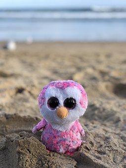 Nature, Sand, Sea, Beach, Penguin, Island, Ocean