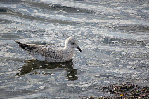 Bird, Body Of Water, Nature, Sea, Fauna, Outdoor, Side