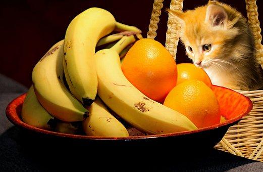 Food, Fruit, Cat, Kitty, Confection, Desktop, Sweet