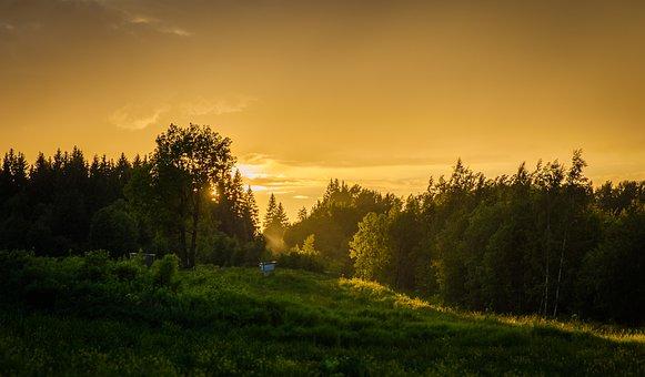 Tree, Landscape, Sunset, Nature, Russia, Forest, Sun