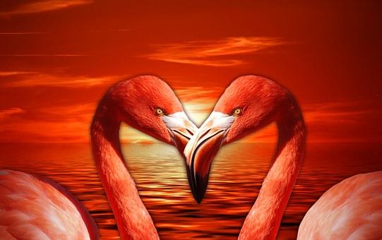 Flamingo, Valentine, Heart, Valentine's Day, Love