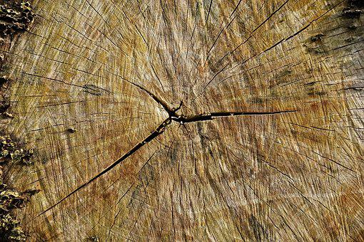 Log, Wood, Cross Section, Lumber, Grain, Annual Rings