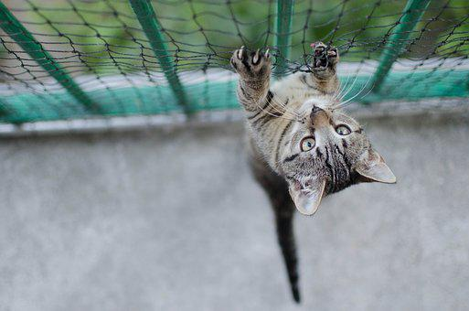 Cat, Bury Cat, Tabby, Pets, Cat Safe, A Normal Cat