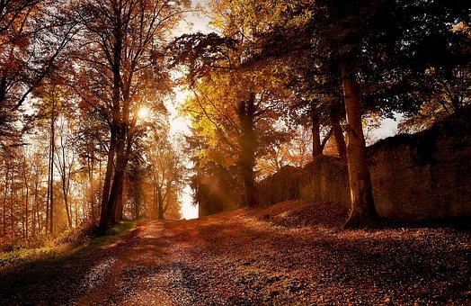 Nature, Tree, Park, Landscape, Autumn, Leaf